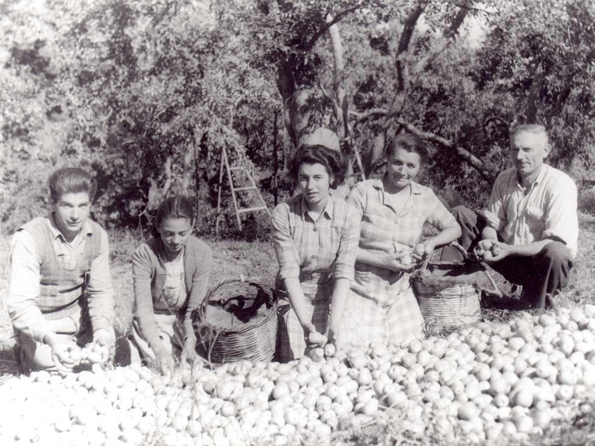 Οικογενειακή φωτογραφία εποχής. Φτιάχνοντας τον σωρό με τα μήλα.