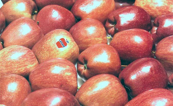 Μήλα με το πρώτο εμπορικό σήμα
