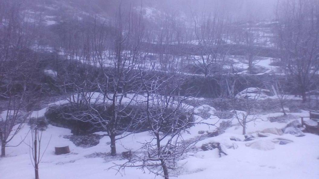 Μηλιές στα χιόνια