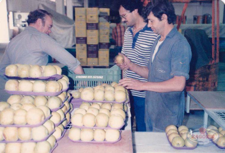 Συσκευασία μήλων golden delicious σε δισκάκια